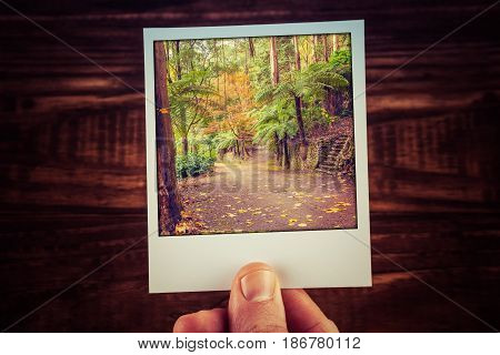 Hand Holding Polaroid Photograph Of Autumn Scene In Australian Garden With Copy Space. Travel Memori
