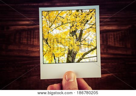 Male Hand Holding Polaroid Photograph Of Yello Maple Tree In Autumn With Copy Space. Travel Memories