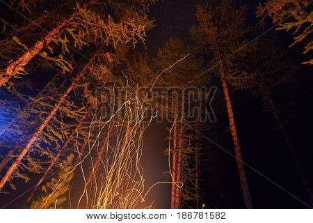 Sparks from a bonfire night in the woods flying in the sky. Fire in the woods under a starry sky the trees illuminated by the light from the fire the tourists night wiring the fire