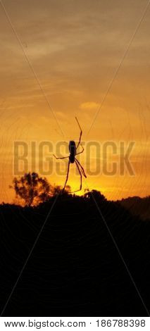 Spider on a spiderweb during the sunrise in Japan.