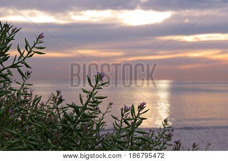 Semaphore beach South Australia sunlight sunset light over the beach and sand grass