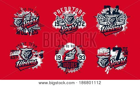 A collection of designs for printing on T-shirts, aggressive wolf ready to attack. Predator forests, dangerous animals, wild animal, mascot, lettering. Vector illustration, grunge effect.
