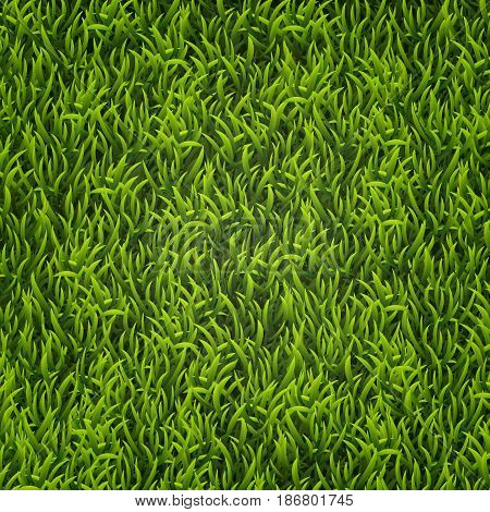 Green grass. Natural background. Texture. Tall grass. Fresh spring green grass Vector