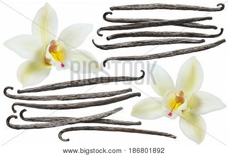 Vanilla flower and bean element set isolated on white background for package design