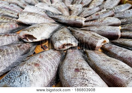 Gourami fish preserves outdoor and background . .