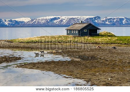 Wooden cottage on the shore of the fjord, Norway.