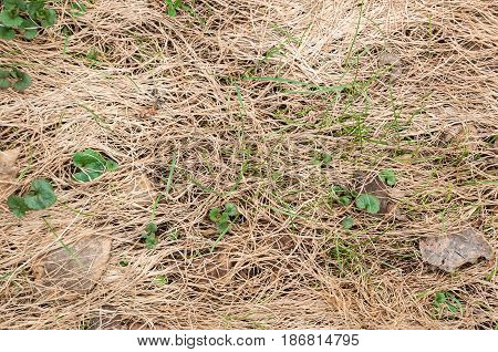 Green shoots make their way through dry grass and fallen leaves