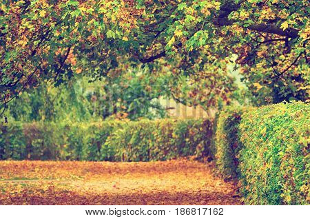 Autumn park with fall trees and leaves, natural seasonal hipster background