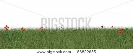 Grassland with beautiful red flowers isolated in white background - 3D render