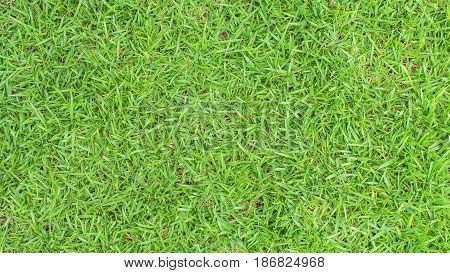 Green grass texture, Green grass background for design. Top view of natural green grass for golf course and soccer field.