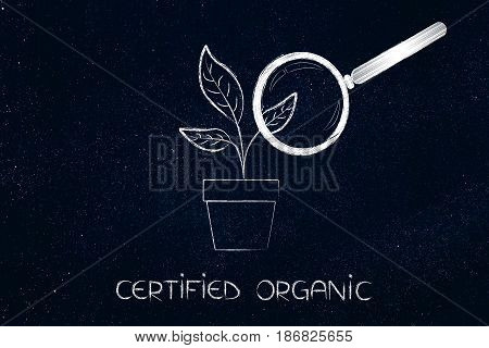 Magnifying Glass Analysing Leaves Growing From A Vase