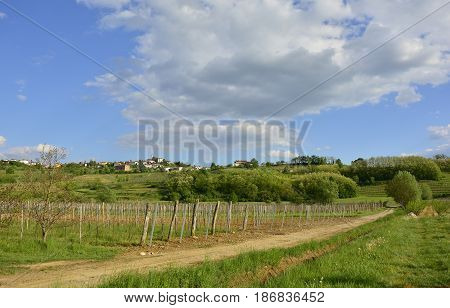 The late April rural landscape around the western Slovenian town of Dobrovo.