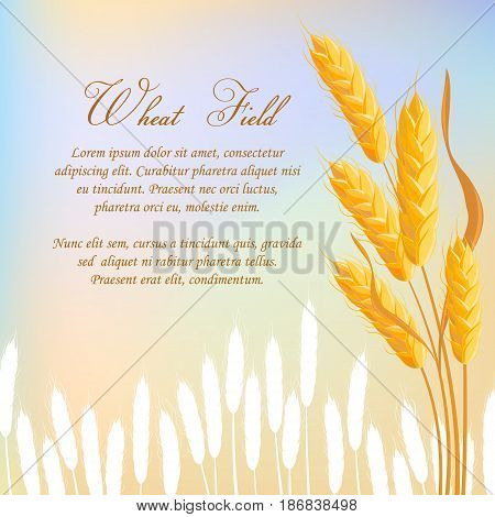 Wheat field agricultural concept with space for text. Bakery design, organic local farming, healthy and natural agriculture. Background with wheat bread ears, cereal crop harvest vector illustration