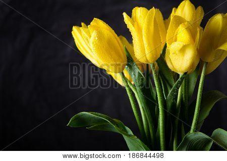 Bouquet Of Beautiful Fresh Yellow Tulips In Dew On Dark Background