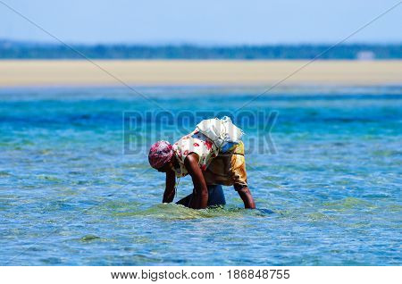 Woman working in Mozambique low tide waters by collecting mussels