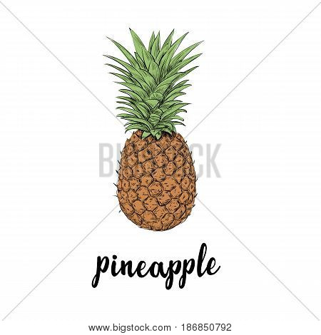 Pineapple fruit. Summer sketch illustration with pineapple. Hand drawing vector. Poster summer