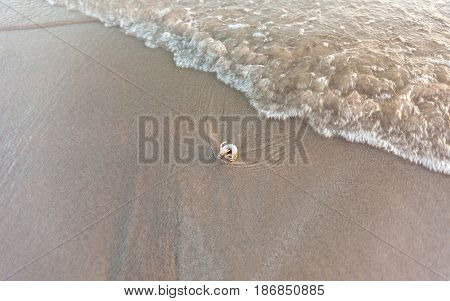 hermit crab on sand beach with wave in sunlight