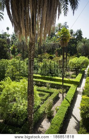 Gardens in sunshine at the Alcazar of Seville