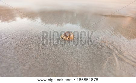 hermit crab on sand beach in sunlight