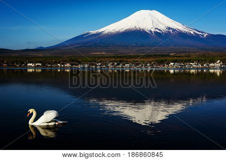 Single Swan Swim On Yamanaka Lake