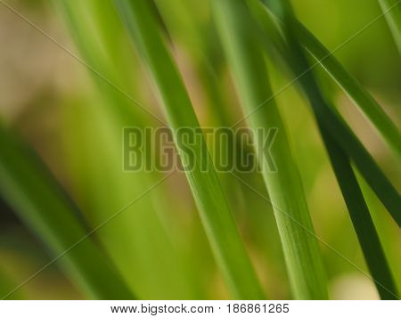 Macro of a plant on abstract background