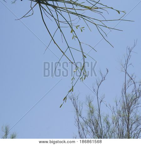 Small pods of tree, blue sky background