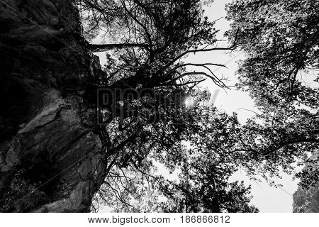 Samaria Gorge. Crete. Greece. Pines on the cliffs and slopes on the background of sky. Black and white.