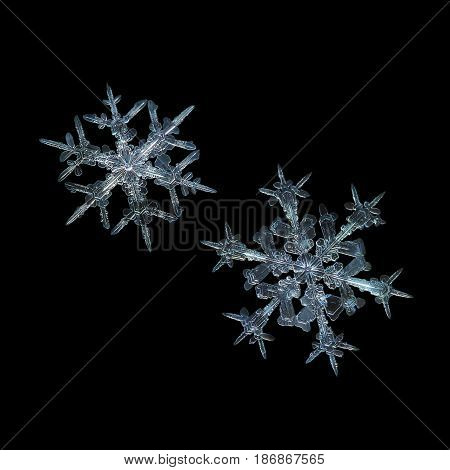 Two snowflakes isolated on black background. This is real snow crystals: large stellar dendrites with elegant shapes, sharp, fragile arms with many side branches and fine symmetry.