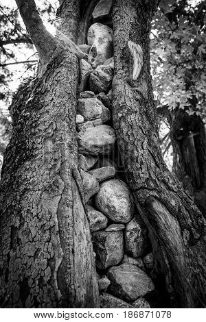 Samaria Gorge. Tourist tradition - tightly packed stones cracked tree trunk. Island of Crete Greece. Black and white.