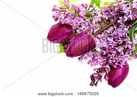 Lilac Flowers With Tulips Isolated On White