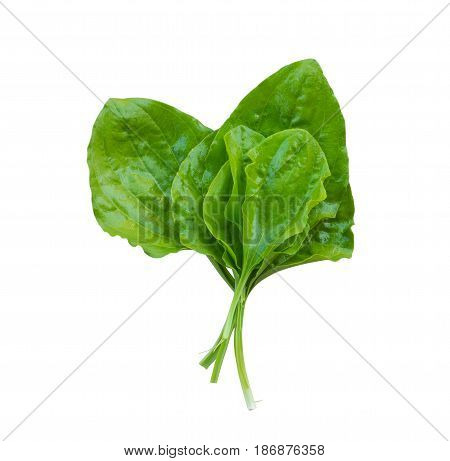 fresh plantain leaves isolated on white background