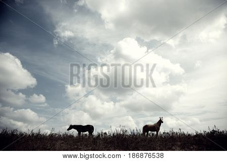 Silhouette of two horses outdoors at the evening