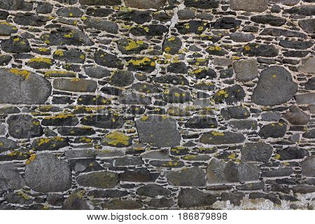 Background texture of yellow green lichen covering grey bluestone wall made of basalt rocks, photo of slow growing fungus on wall