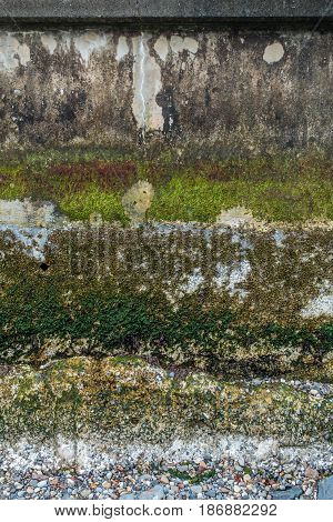 Various types of plants life grow on this seawall at low tide. Background or texture.