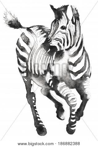 black and white painting with water and ink draw zebra illustration