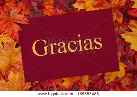 Spanish Thank You Greeting Card Some fall leaves and a greeting card with text Gracias