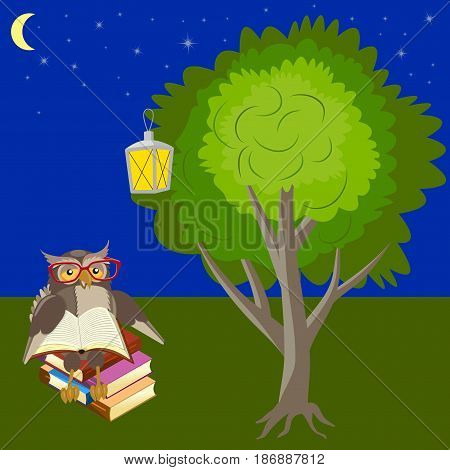 Owl reading a book under a tree in the night forest, lantern and starry sky vector illustration