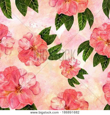 A vintage style seamless background pattern with hand drawn watercolor camellia flowers in bloom, with green leaves, on a pink texture