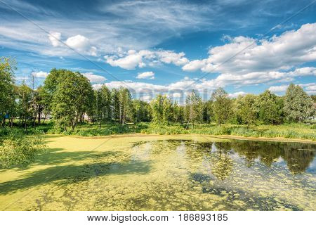 Scenic View Of Summer Sunny Forest Woods And Wild Bog With Duckweed On Water Surface. Nature. Nobody. Blue Sky