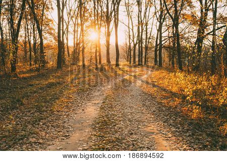 Winding Countryside Road Path Walkway Through Autumn Forest. Sunset Sunrise. Nobody. Road Turns To Rising Sun