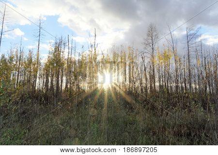 Autumn sunset through a rare row of trees