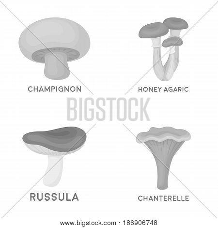 Champignon, honey, agarics, russula, chanterelle. set collection icons in monochrome style vector symbol stock illustration .