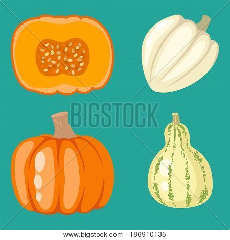 Fresh orange pumpkin decorative seasonal ripe food organic thanksgiving stem healthy raw vegetarian vegetable. Natural harvest patch garden holiday autumn plant.