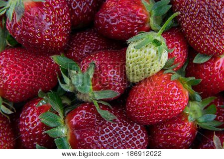 Unripe Strawberry on Pile of Red Berries