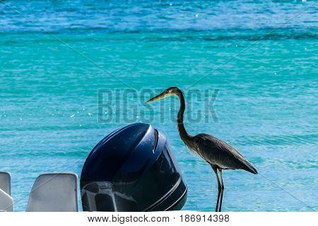 Herron languishes on small boat in Jost Van Dyke