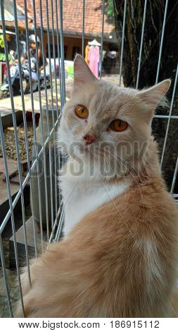 Beautiful brown cat photo photos with yellow eye