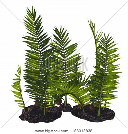 Nipa burtinii Plants 3d illustration - Nipa started out in the Cretaceous Period and live today in swamps river borders and humid areas.
