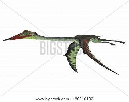 Quetzalcoatlus Wings Down 3d illustration - Quetzalcoatlus was a carnivorous pterosaur reptile that lived in the Cretaceous Period of North America.