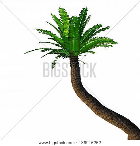 River Cycad Encephalartos altensteinii Tree 3d illustration - Cycads have a stout woody trunk with a crown of evergreen leaves and were more numerous in prehistoric times.