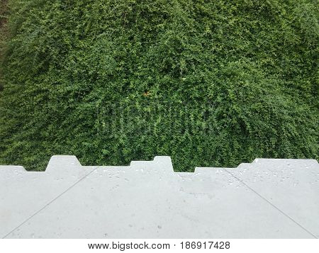 grey cement ledge with green bushes below
